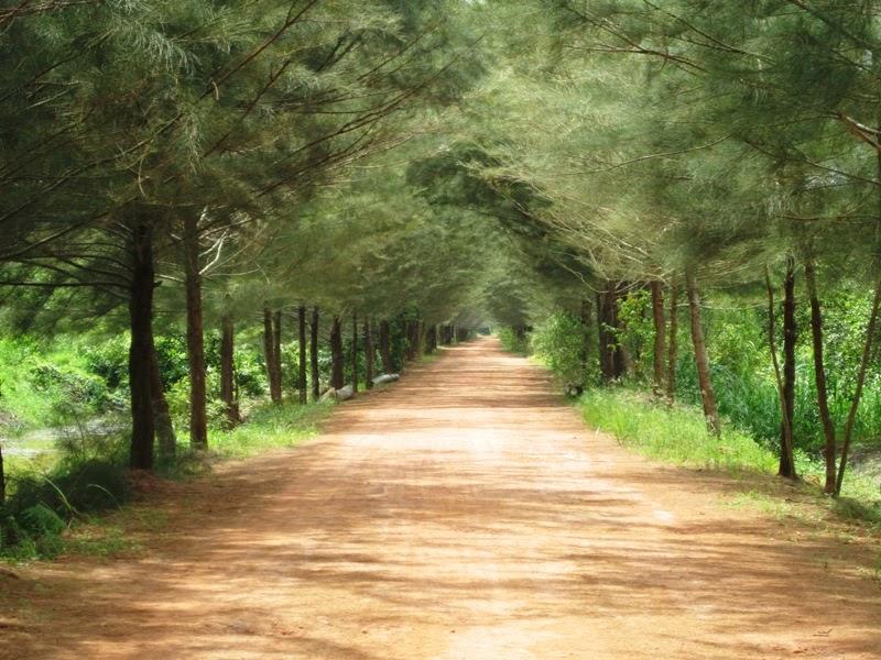 Bangka-Botanical-Garden-Pulau-Bangka